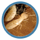 Termite Control and Inspection