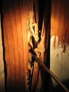 termite_wood1