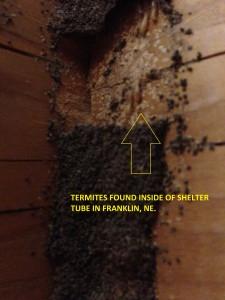 Termites Franklin NE (2)
